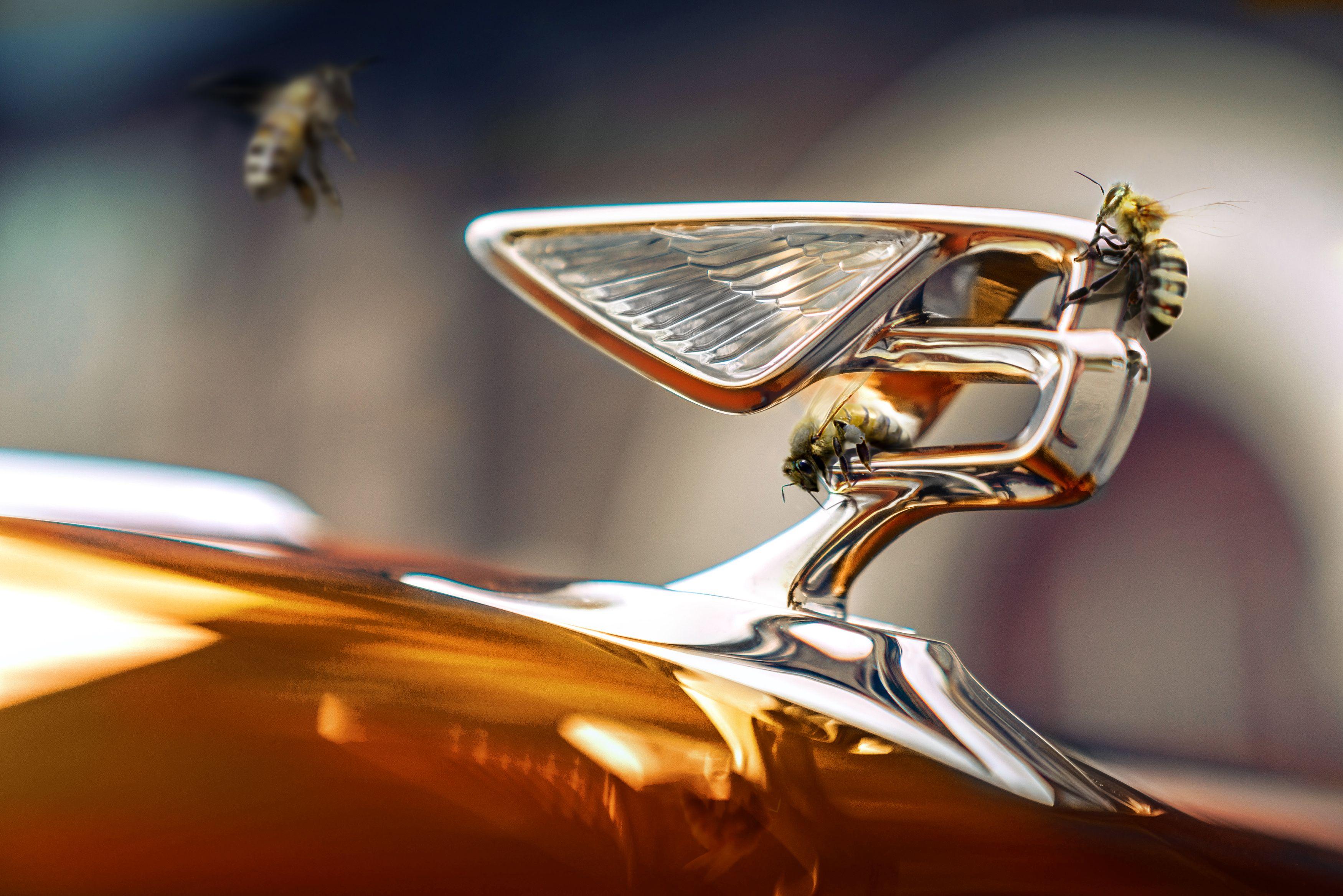 Пасіка Bentley принесла перший мед
