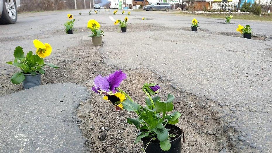 У Виноградові в дорожних ямах зацвіли квіти